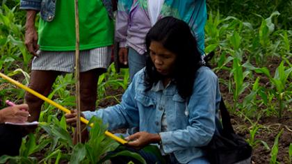 Impact assessments help farmers in Asia and Latin America adapt to changing climates